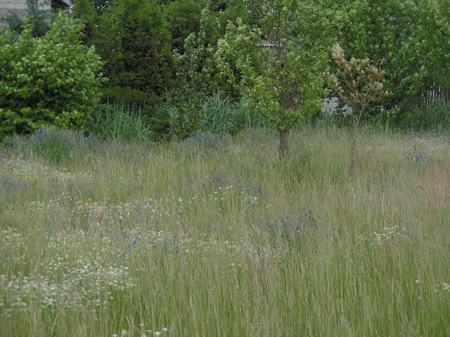 dzika łąka kwietna
