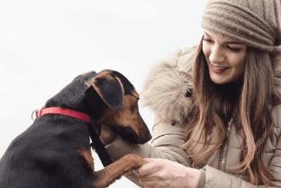 Dog Anxiety Medication Benadryl