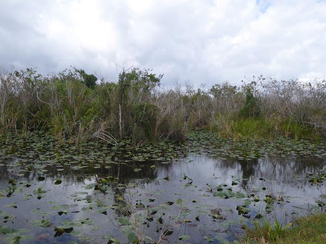 canali delle everglades