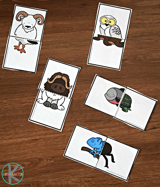 preschool-kindergarten-first-grade-animal-science-printable
