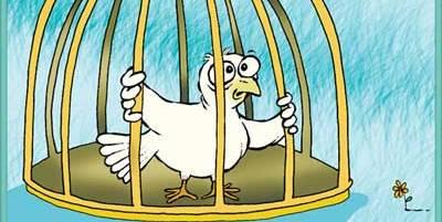 paloma-encarcelada.jpg