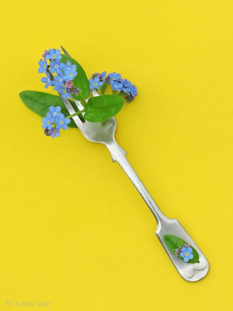 jadalne kwiaty niezapominajki