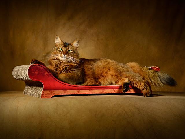 das perfekte weihnachtsgeschenk f r katzen design kratzb ume und m bel f r katzen. Black Bedroom Furniture Sets. Home Design Ideas