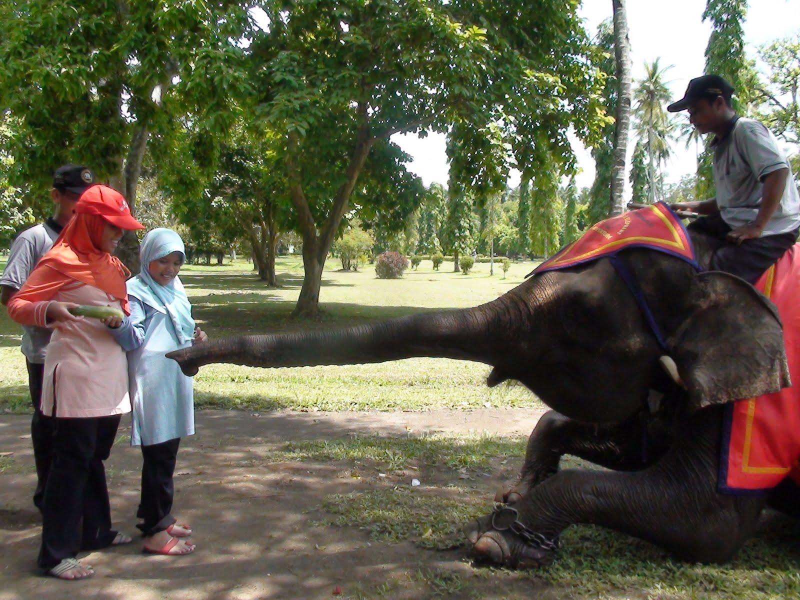 Taman Wisata Candi Borobudur Wahana Gajah