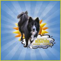 In memory of my dog Scratch.