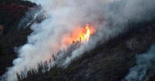 عاجل: غابات أستراليا تحترق