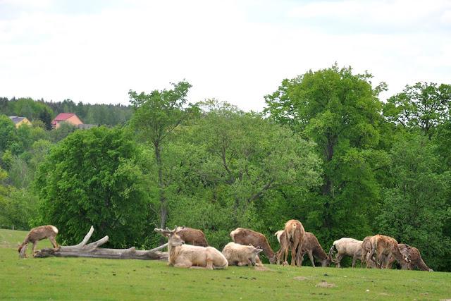 Zwierzyniec Górny  Park Safari w Bałtowie