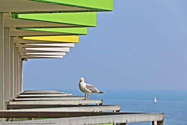 Möwe auf dem Hotelbalkon im Ostseebad Damp