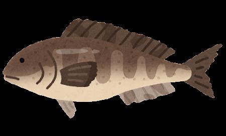 ホッケのイラスト(魚)