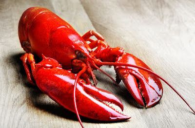 Lobster Scientific Name within the Same Family
