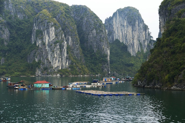 Admire Halong Bay - One of 7 World Natural Wonders 5