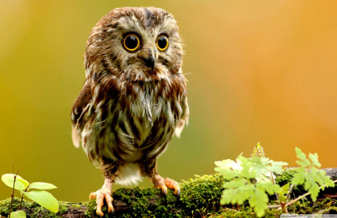 Owl Wallpaper Background Wallpaper Gallery