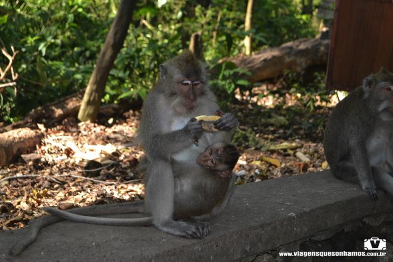 Floresta dos Macacos