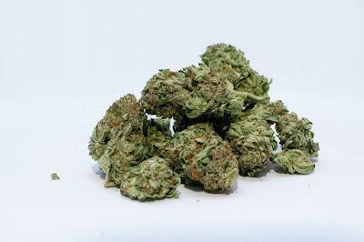 Háromszék, Kovászna, kábítószer kereskedelem, DIICOT, házkutatás, marihuána,
