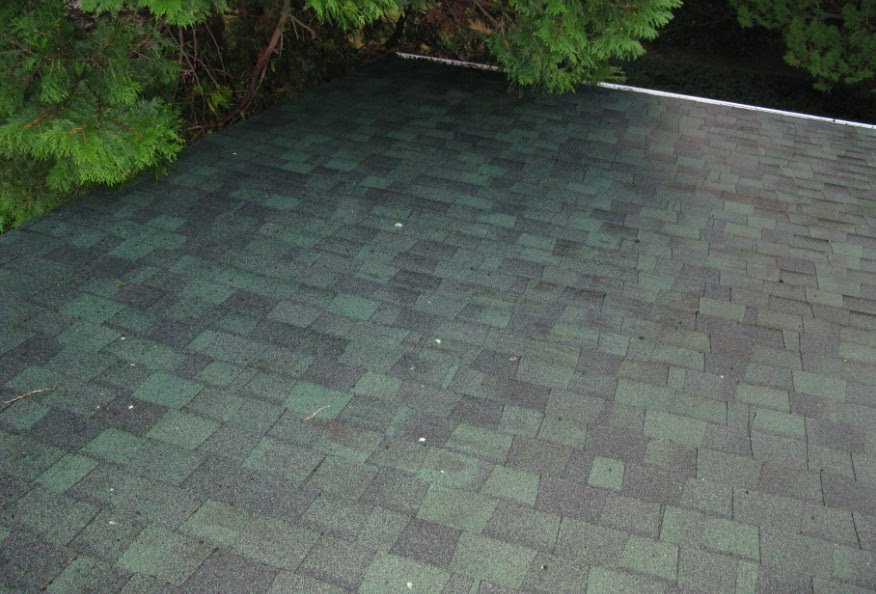 Highline Carpentry Roof Mildew Removal