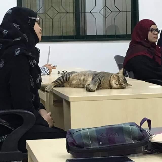 Labun Kucing Yang Mempunyai Kad Matrik Sendiri Dan Masuk Kelas Di UIA