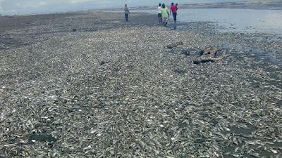 Liborio Rosero hablò desde el Litoral del San Juan de la mortandad de peces que es investigada por las autoridades