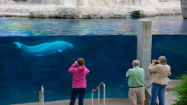 Best Aquariums in the USA: Mystic Aquariums & Institute for Exploration