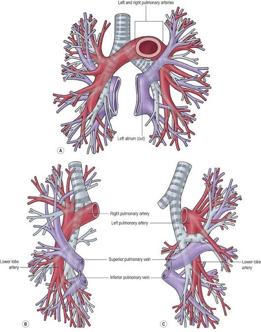 Amazing Pulmonary Embolism