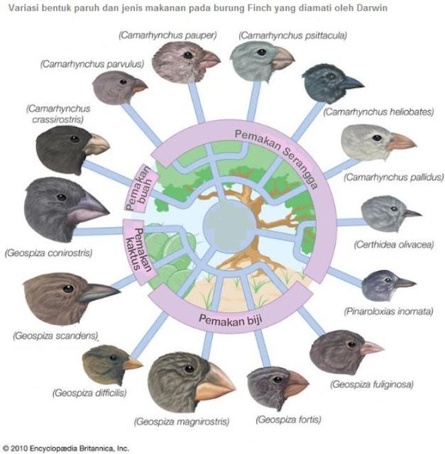 Teori Evolusi Darwin dan variasi burung finch