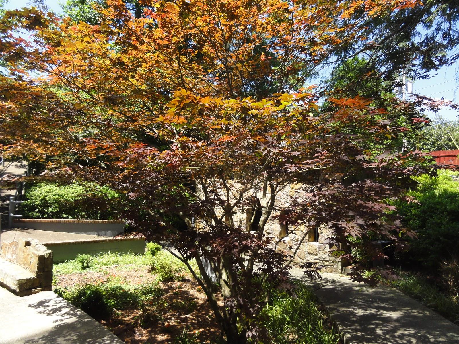 goGardenNow: Behind A Garden Wall: The Ave Maria Grotto - Cullman ...