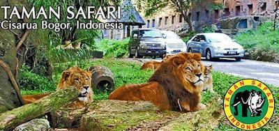 taman safari, tiket safari, safari bogor