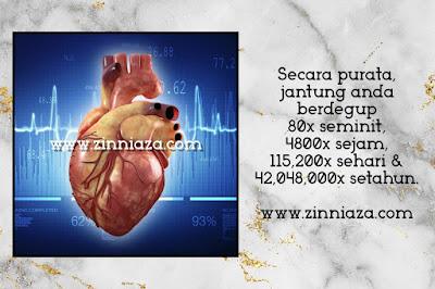 purata jantung berdegup