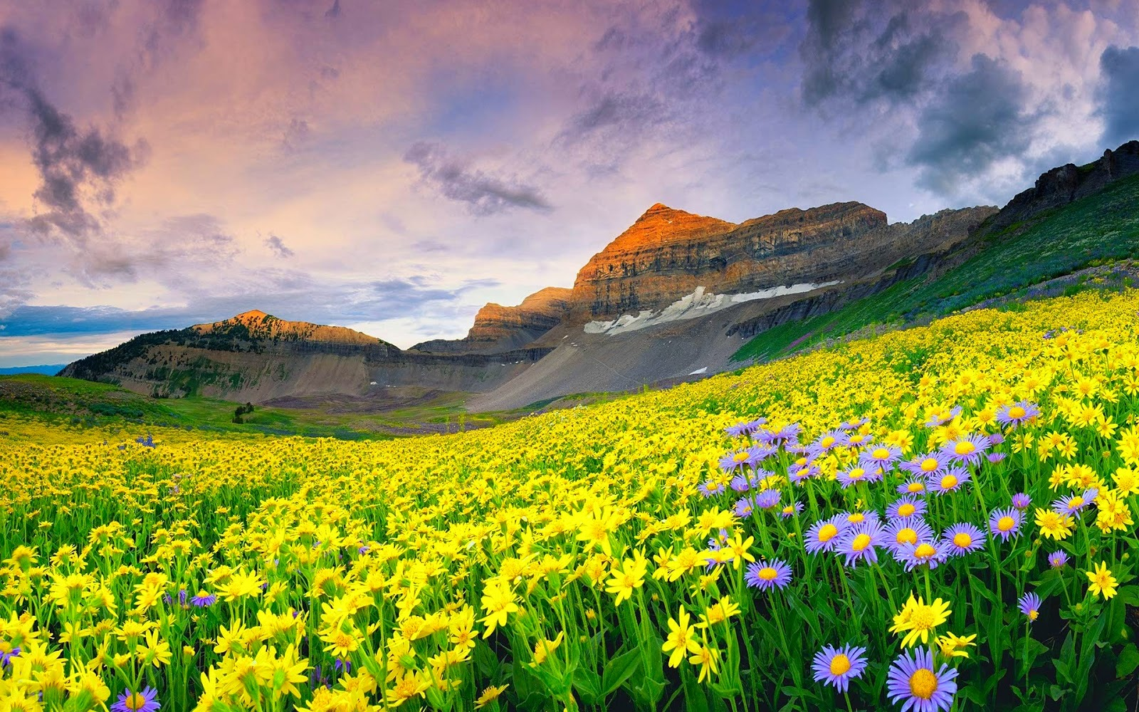 Wallpaper: Mountain Flower: Extreme Beauty of Nature