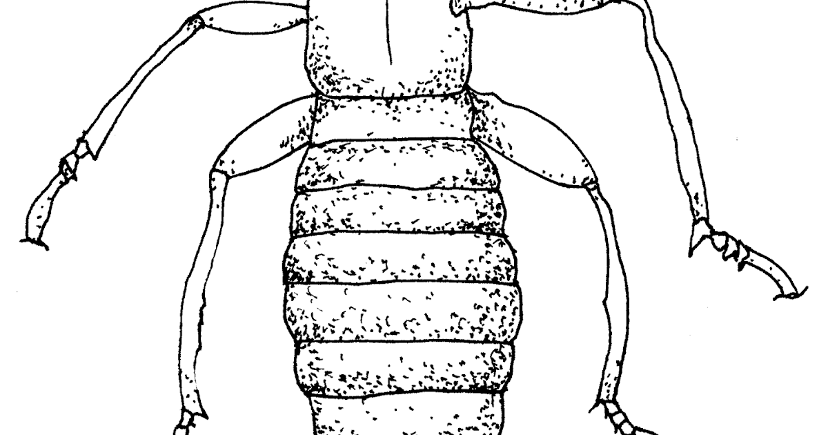A Terminal Case of Whimsy: The Termite is a Good Example