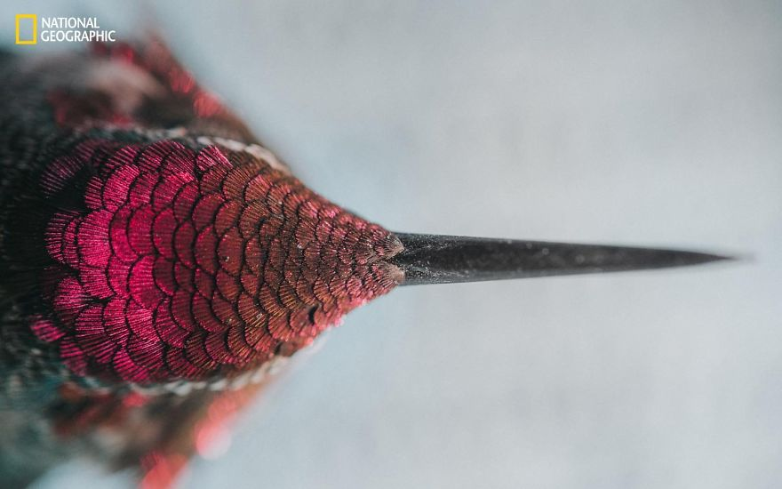 20+ Of The Best Entries From The 2016 National Geographic Nature Photographer Of The Year - Hummingbird