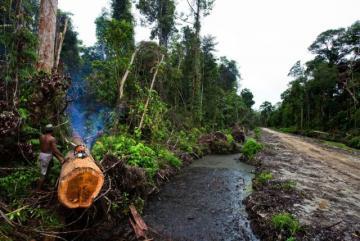 Kilas Balik Moratorium Logging di Aceh