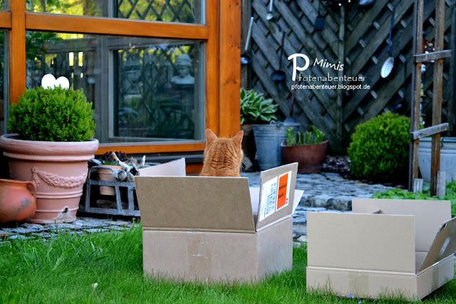 Katze Mimi guckt aus einem Karton