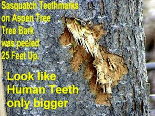 is this bigfoot teeth marks