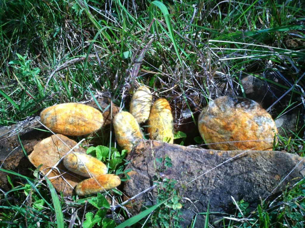 pedras feltradas soltas no mato com pedras naturais