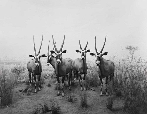Hiroshi Sugimoto | fotos en blanco y negro chidas, imagenes de animales