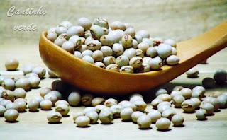 Cultivo e sementeira do Feijão guandu Cajanus cajan