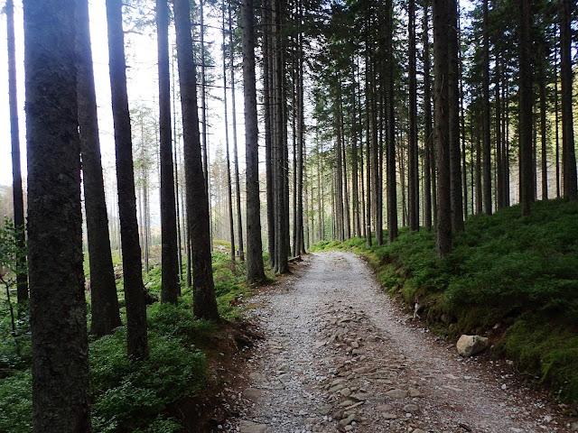 Iglasty las w Dolinie Bystrej, okolice Myślenickich Turni