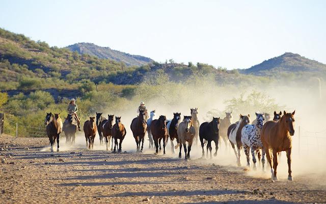 Groep rennende paarden