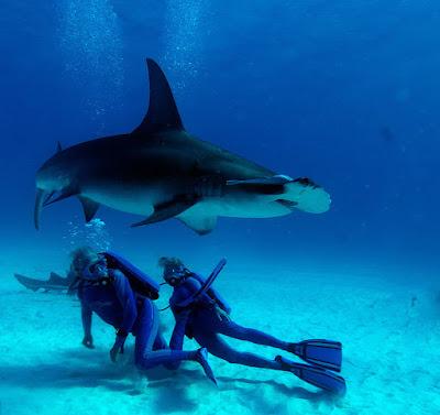 Wonders of the Sea - Fotograma (os diría quiénes son los que salen en la imagen, pero vestidos así no los distingo)