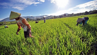 Ciri-Ciri Masyarakat Pedesaan Menurut Talcot Parsons