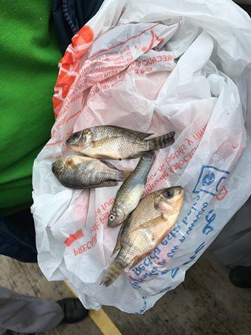На севере Мексики прошел дождь с рыбами