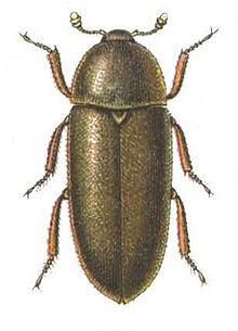 Royal BC Museum: Beetlemania