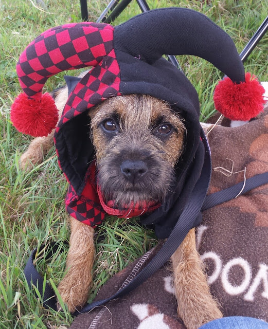dog dressed as a jester