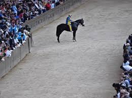 Vento largo  Il cavallo bloccato dal panico. «Anche loro si stressano». af180926d7ed