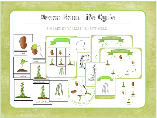 Montessori Activities - Green bean life cycle printables by Welcome to Mommyhood #lifecycleactivities, #montessori, #Montessoriactivities, #preschoolactivities, #springactivities, '