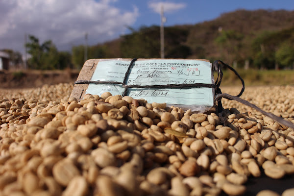 來自咖啡產地的急件,急切地訴說 小農的困境。