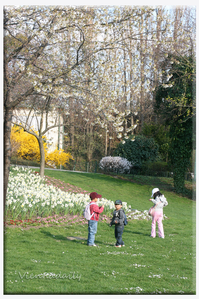Here are some of the spots in #Vienna where the flowers are in full bloom come #spring.