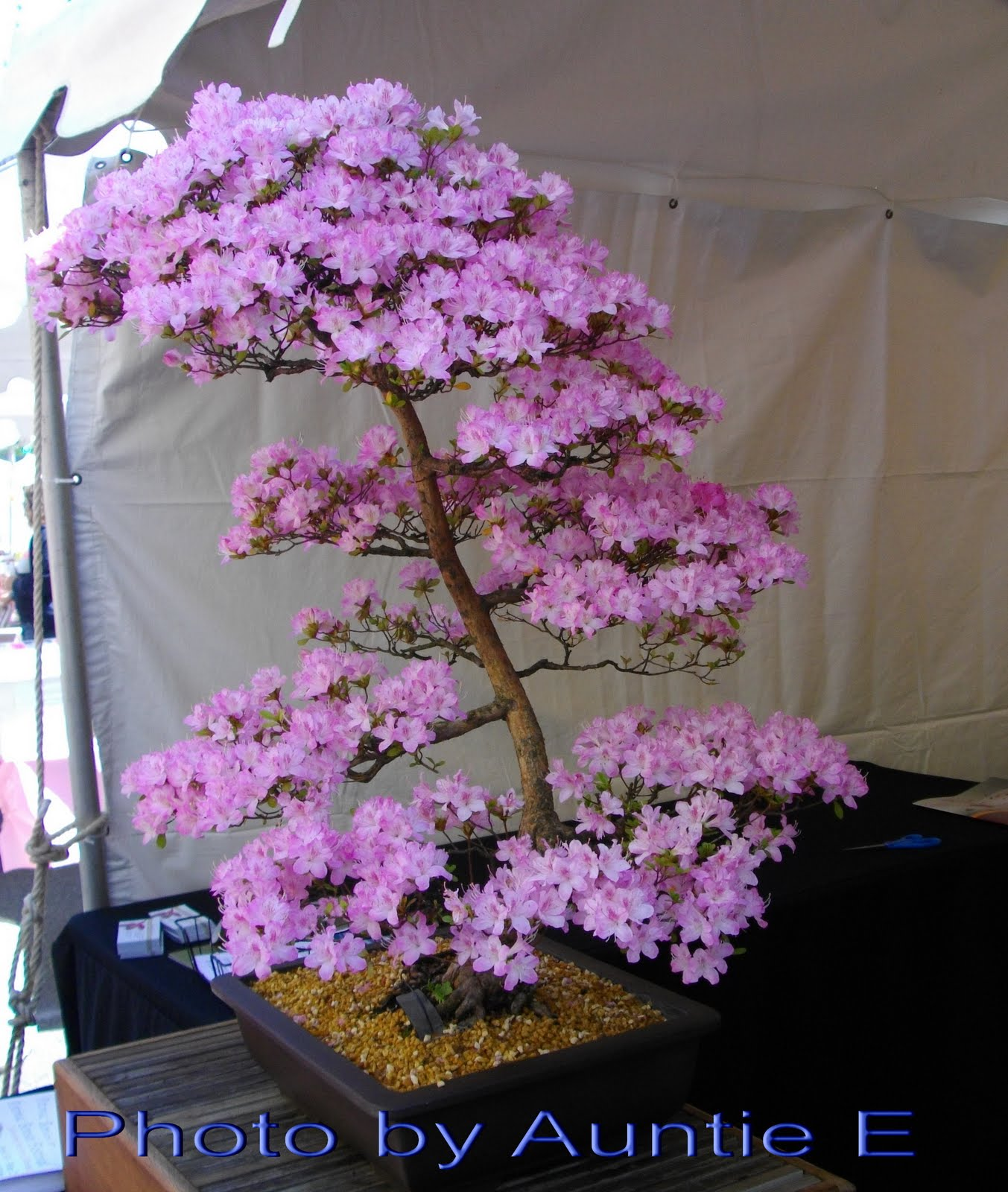 Bonsai Tree 23 Excellent Purple Bonsai Tree Inspirations