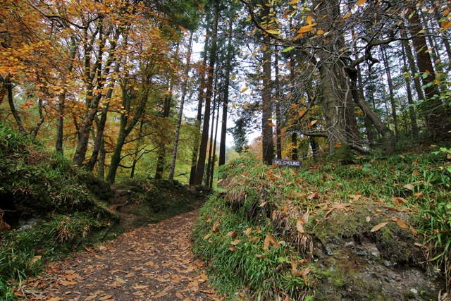 Glenariff Forest