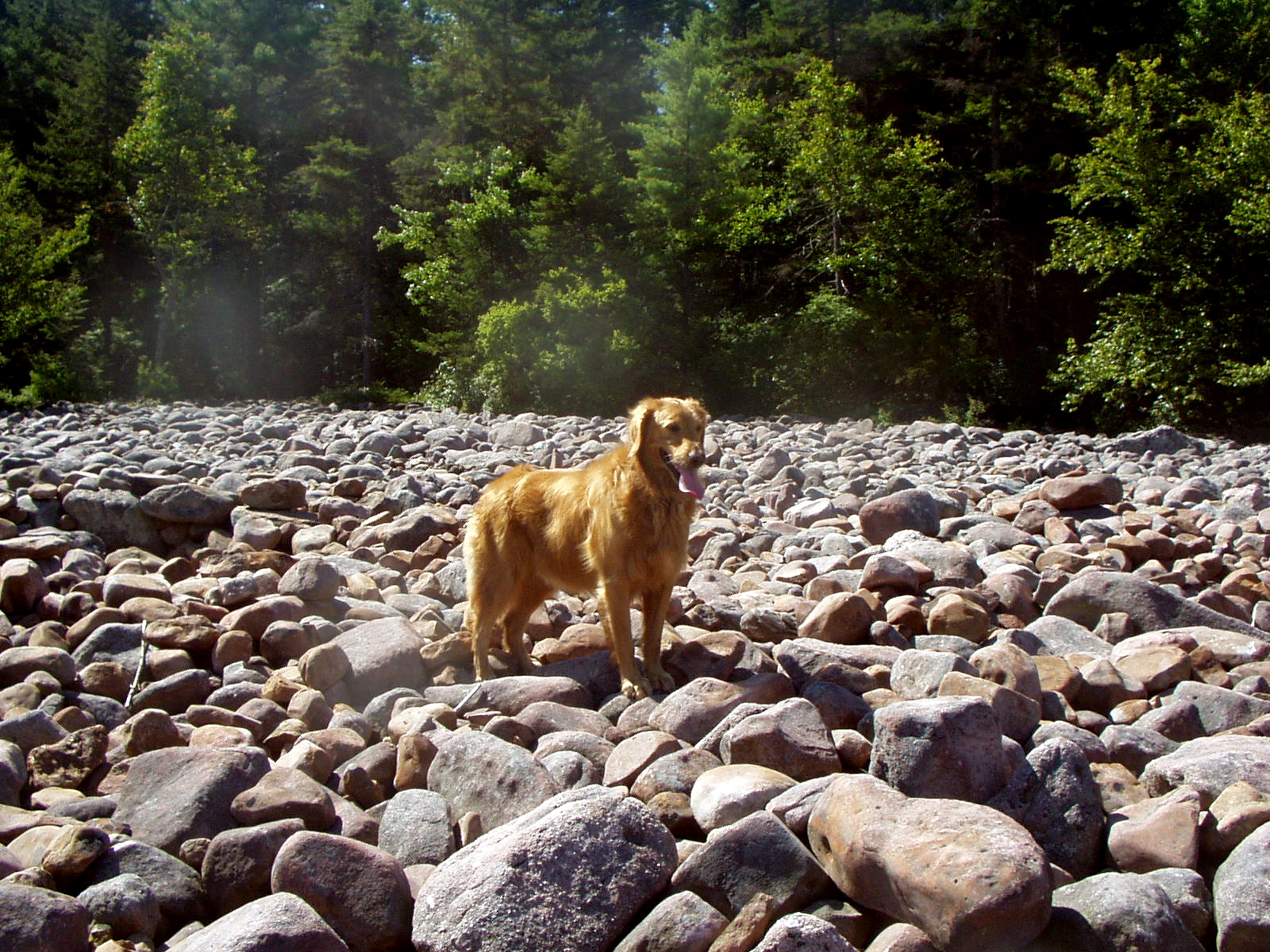 Hikewithyourdog Hickory Run State Park